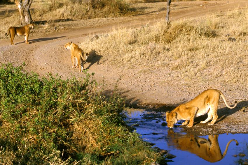 Tansania, Serengeti - Safari