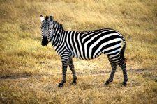 """Reisen – Tansania – """"Begegnung mit den Big Five"""""""