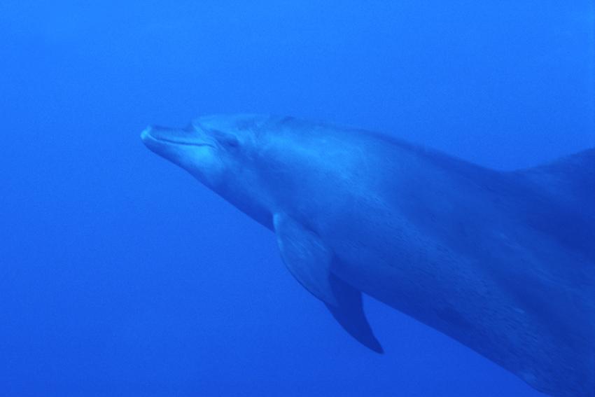 Ägypten, Südtour - Delfin