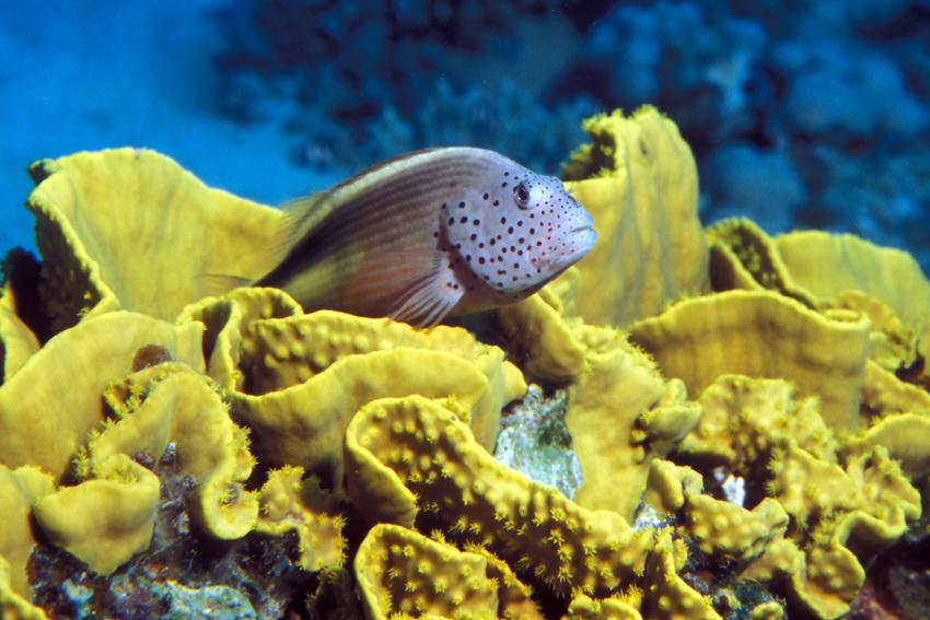"""Reisen – Heaven Divers – """"Kulinarische Genüsse auf dem Roten Meer"""""""