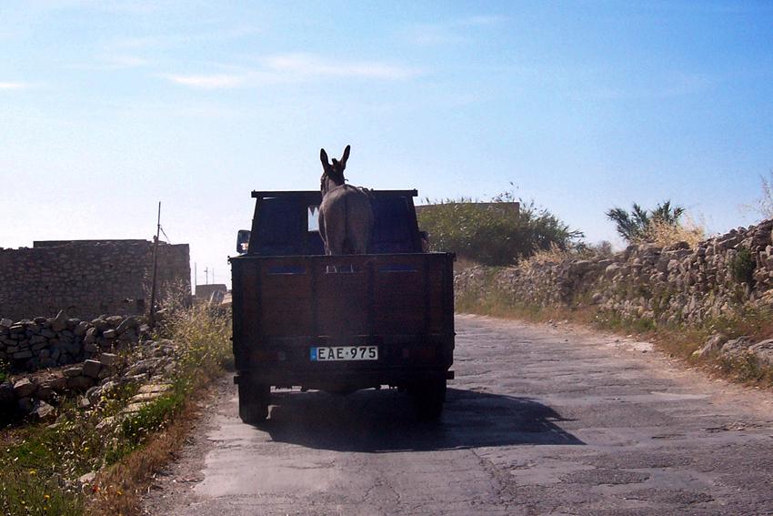 Malta - Esel-Transport