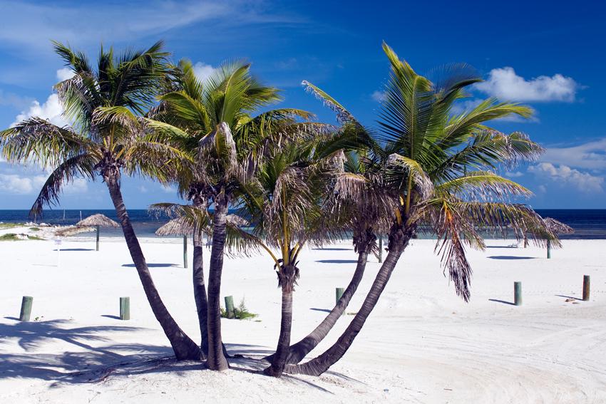 Bimini Island - Palmen am schneeweissen Sandstrand