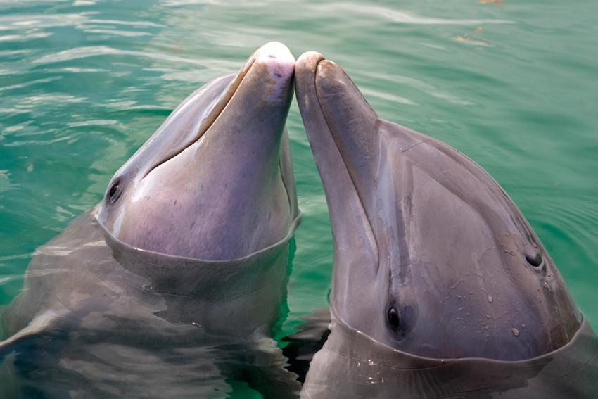 Delfine, UNEXSO, Bahamas