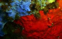 Italien, Sardinien - Blauer und roter Schwamm