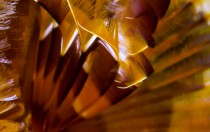 Italien, Sardinien - Röhrenwurm