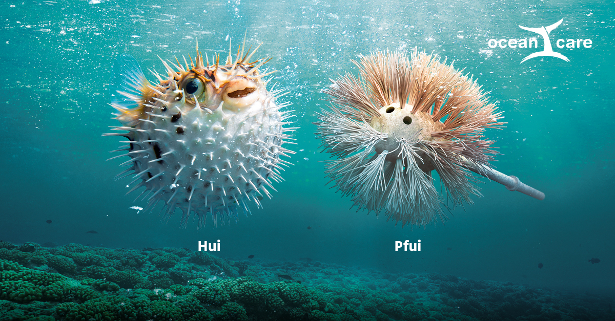 Oceancare Plastikkampagne – Kugelfisch
