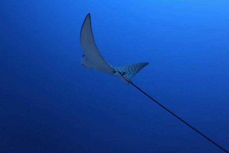 """Reisen – Malediven – """"Silvie auf Tuchfühlung mit Mantas und Walhaien"""""""