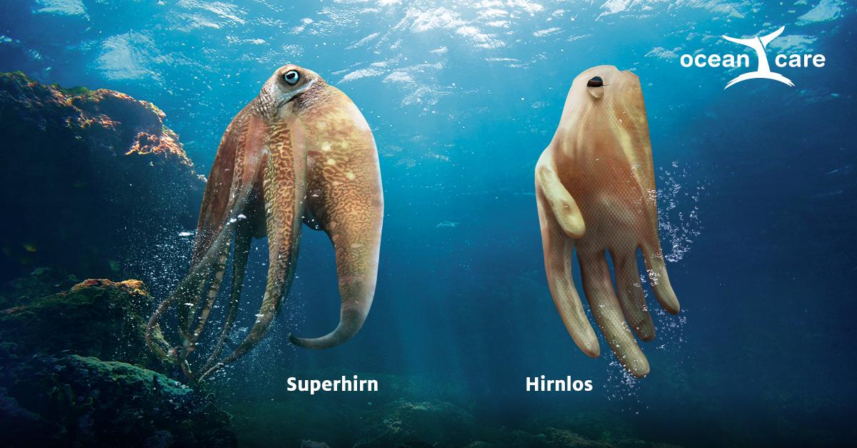 Oceancare Plastikkampagne - Oktopus