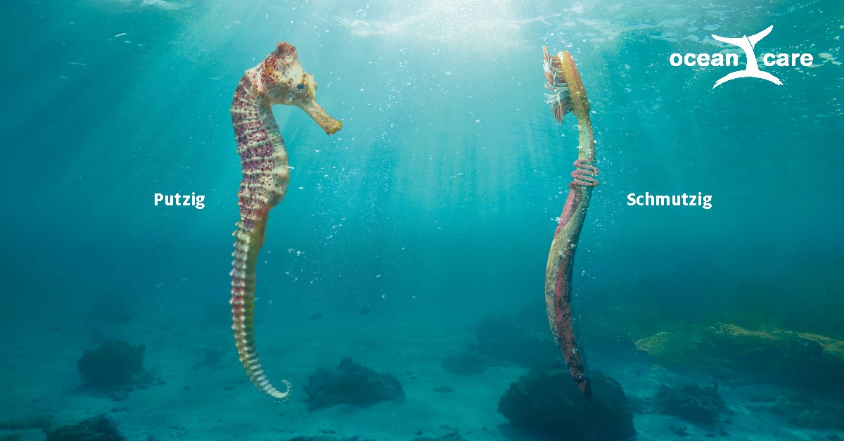 Oceancare Plastikkampagne - Seepferdchen