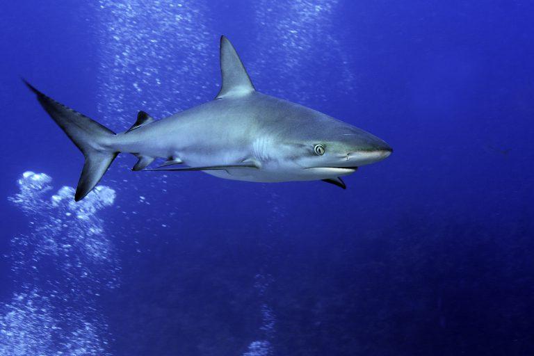 """Tierwelt – Ornella Weideli – """"Essverhalten der Haie!"""""""
