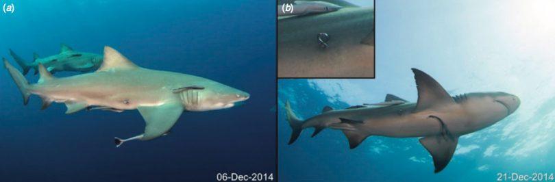 shark-first-2017-7-20